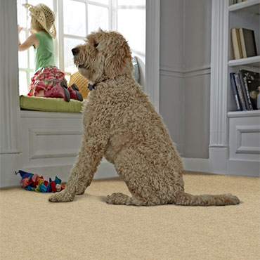 Phenix Plush Carpet